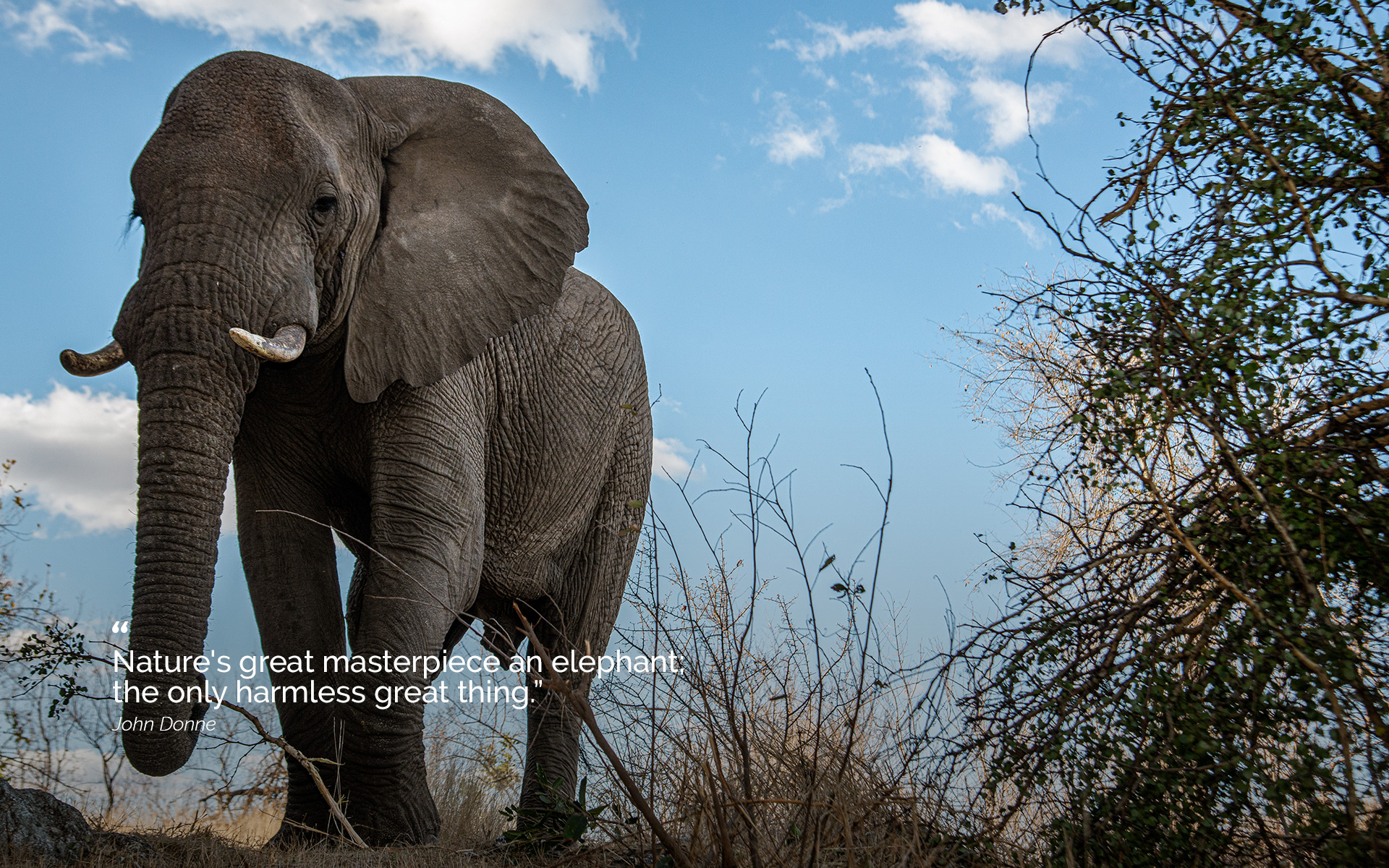 """""""Nature's great masterpiece an elephant;  the only harmless great thing."""""""