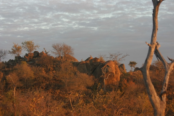 3 Klipspringer at top of old airstrip by Rene A4