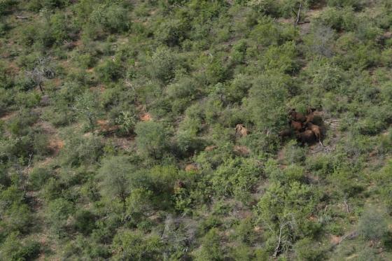 Aerial view of ele herd by Kenny Jones