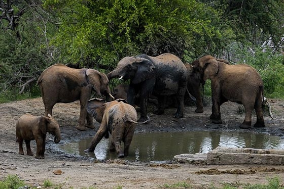 Breeding herd at Idube by DO B33