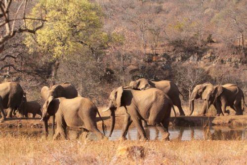 Breeding herd at Kudu Pan by Graham Benfield