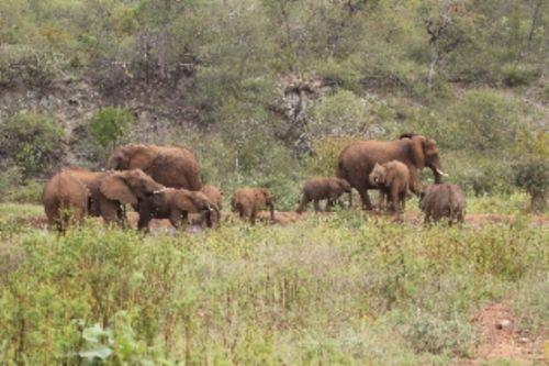 Breeding herd by Graham Benfield