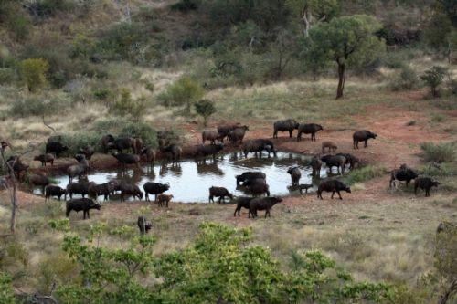 Buff at Kudu pan by Nic Holzer