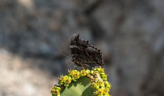 Butterfly by Eileen Fletcher