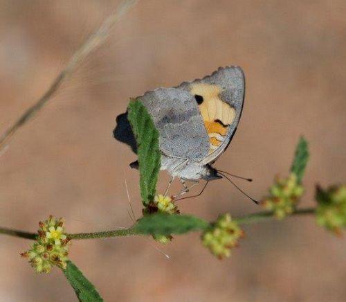 Butterfly by John B35