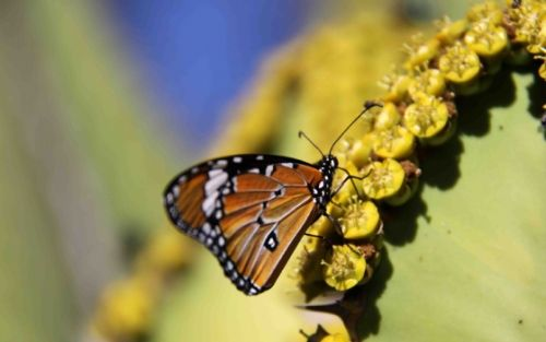 Butterfly by Nic Holzer