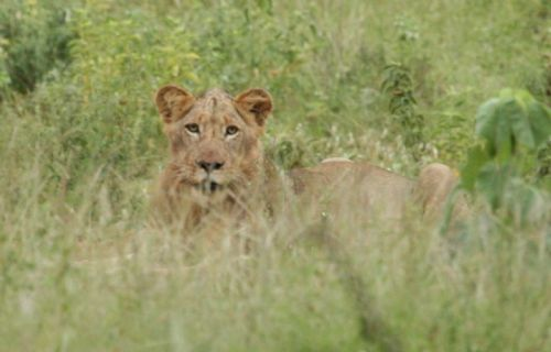 Cub at Kudu Pan by Kenny Jones