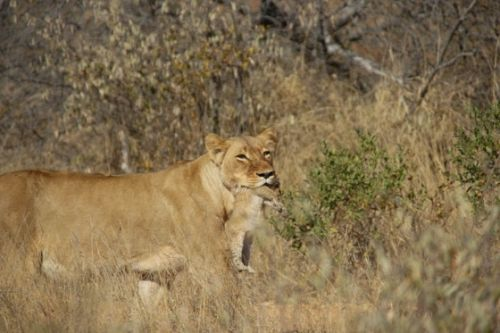 Cub number 3 by James Markham