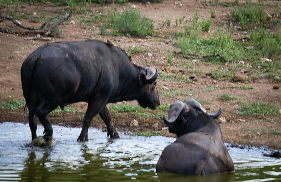 Dagga boys at Wildebeest Dam by Dan B33