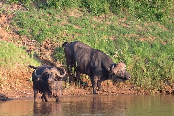 Dagga boys on the Olifants River - Johann Grobbelaar B38