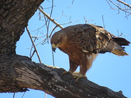 Eagle by Jean B13