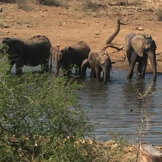 Elephant at Dam by Jean B13