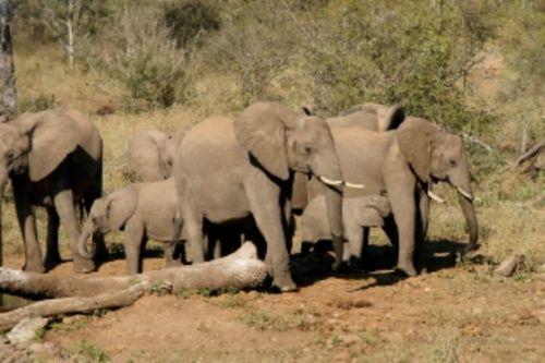 Elephant at Wildebeeste Dam by Roy Markham