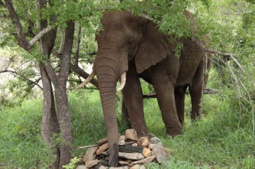 Elephant at unit by Graham Benfield