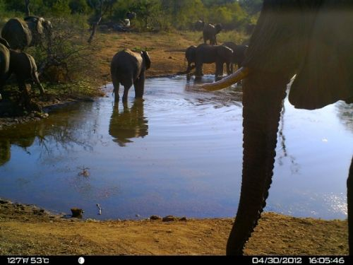 Elephant drinking at Wildebeeste dam
