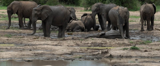 Elephant fun by Eileen Fletcher