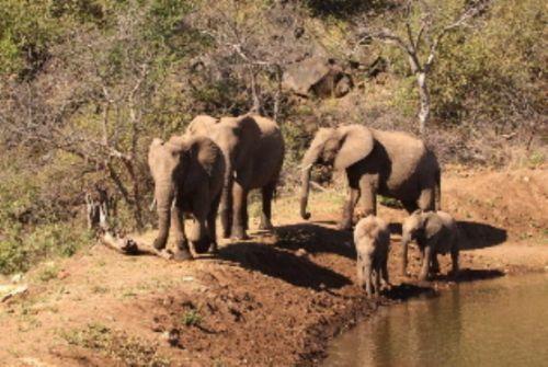 Elephant herd by Graham Benfield