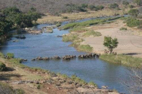 Elephant herd crossing Olifants by Rene Vromans