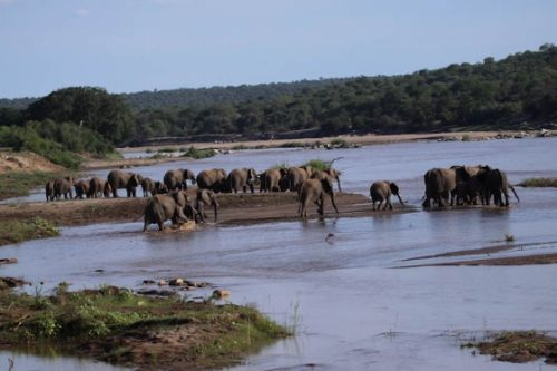 Elephant herd in Olifants River by Graham Benfield