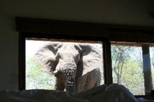 Elephant outside unit 21 by James Markham
