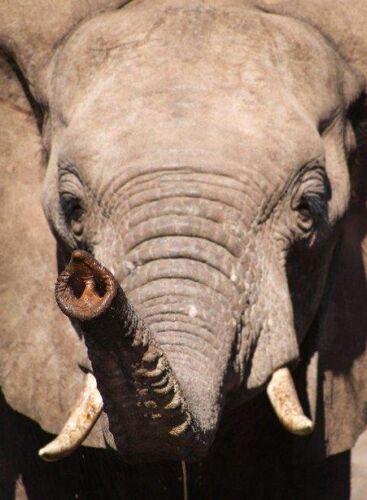 Elephant trunk by Kate B8