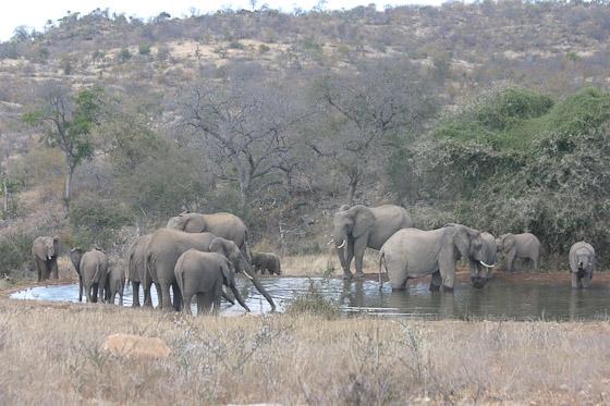 Ellies at Kudu Dam by Rene A4 (1)