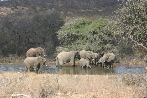 Ellies at Kudu Dam by Rene A4 (2)