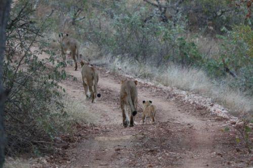 Family outing near Kudu pan by Fritha Davidson