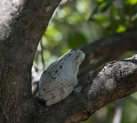 Foam nest frog by Eileen Fletcher 2