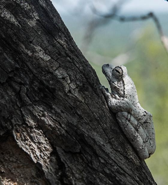Foam nest frog by Eileen Fletcher
