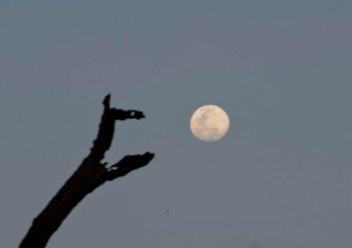 Full moon by Manuel Lopes