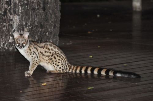 Genet on unit B1 deck by Mandy Proudfoot