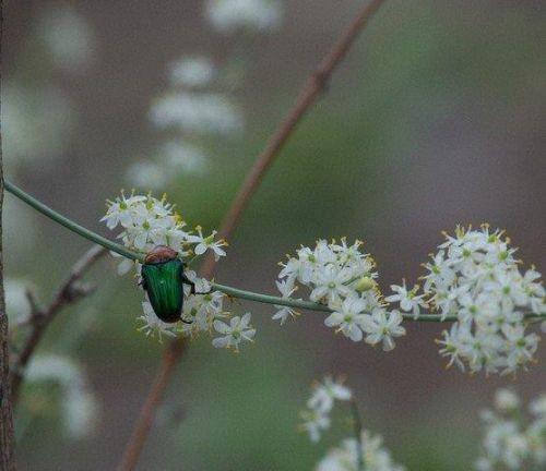 Green bug by John B35