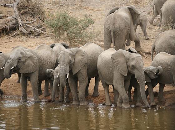 Herd of 24 at Ndlovu by James B21