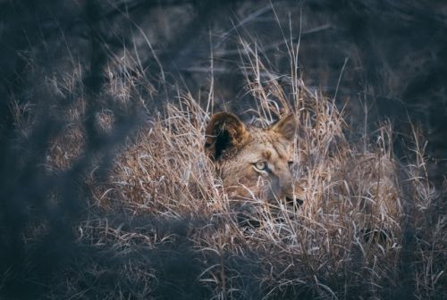 Hiding in the Long Grass at Wildebeest Dam by Dan B33