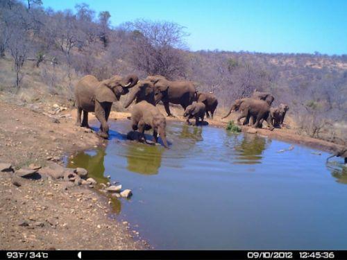 Hurrying to Kudu Pan