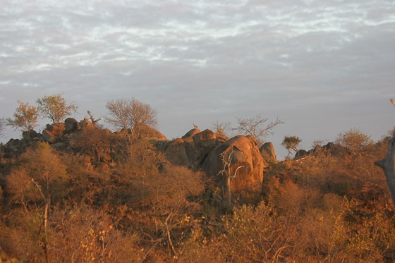 Klipspringer at top of old airstrip by Rene A4