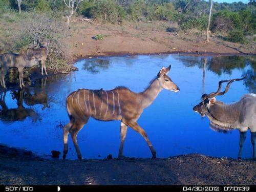 Kudu family at Wildebeeste
