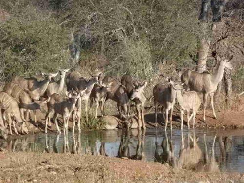 Kudu pan scene by Richard Wostenholm