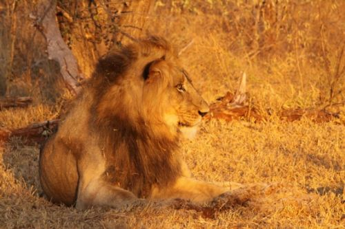 Kuifkop in afternoon sun by Graham Benfield