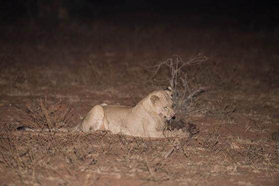 Left over warthog by Johann B38