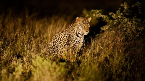Leopard at Hide Dam by Carl Hattingh
