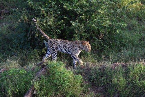 Leopard at Wildebeest dam by Simon B19 (10)
