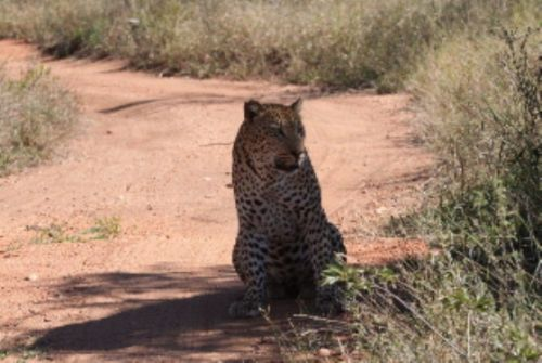 Leopard by Graham Benfield