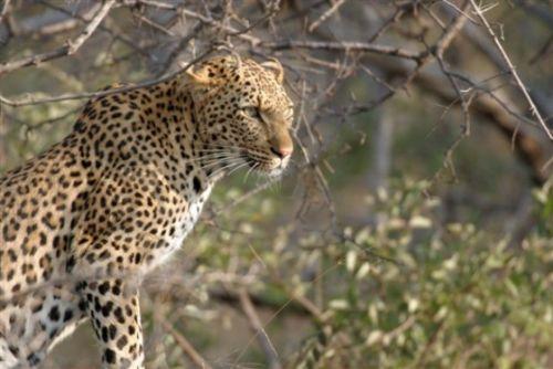 Leopard on old airstrip by Jock Mckenzie 2