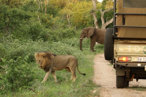 Lion and elephant. Kenny Jones.B7