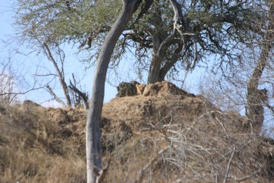 Lion in hiding at Ndlovu dam by Rene A4
