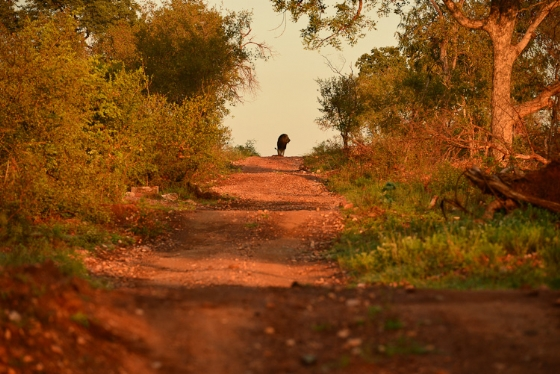 Lion on road to nowhere by Kit B8