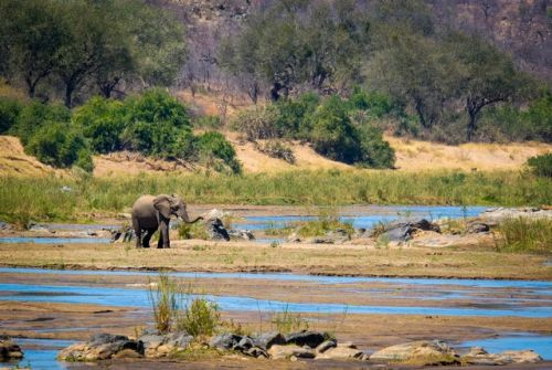 Lone Elephant Crossing the Olifants by Dan B33