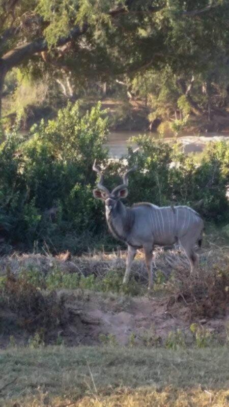 Majestic kudu bull by Jean du Randt